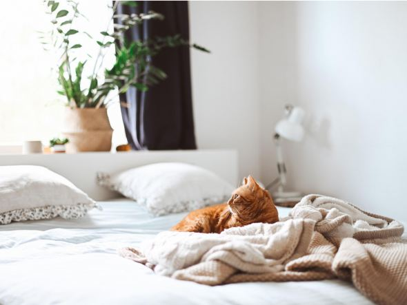 Hoe maak ik een matras schoon?